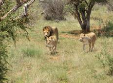 South Africa Family Safari with Teenagers Tour