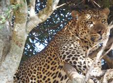 Kruger Lodge Experience (3 days) Tour