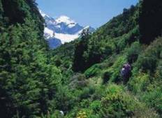 New Zealand Trekking / Alpine Adventure Tour