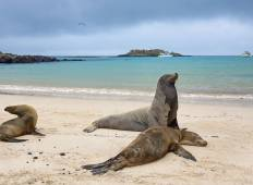 Galapagos Adventure: Northern Islands (Daphne) Tour