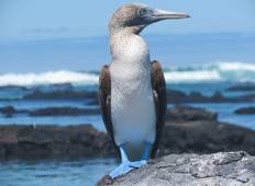 Galapagos Adventure: Northern Islands (Grand Daphne) Tour