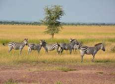 Serengeti & Ngorongoro Experience - Independent Tour
