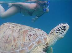 Perhentian Turtle Project - 3 Weeks Tour