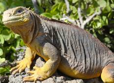 Galápagos Adventure Tour