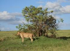 Big 5 Wildlife Conservation 3 Weeks Tour