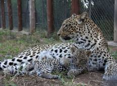 Bulawayo Wildlife Sanctuary 3 Weeks Tour