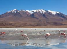 Uyuni Salt Flats & Desert Adventure (La Paz to La Paz) Tour