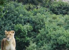 Masai Mara Interactive Safari 3D/2N Tour