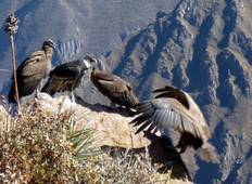 Colca Canyon Trekking (3 days) Tour