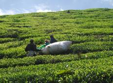 Cameron Highlands Adventure Tour