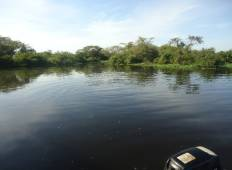 Bolivian Amazon Pampas Adventure (from Rurrenabaque) (3 days) Tour
