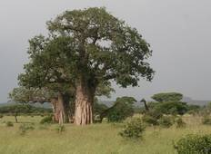 Day Trip - Tarangire National park Tour
