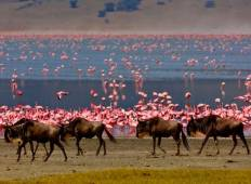 Day Trip - Ngorongoro Crater Tour