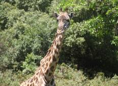 Day Trip - Arusha National Park Tour