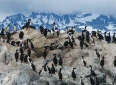 Discover Antarctica 11 days from Ushuaia Tour