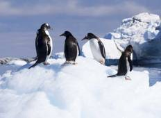 Antarctic Peninsula, Falkland Islands & South Georgia Tour