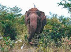 Wild About Sri Lanka - 10 days Tour