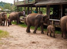 Chiang Mai & Elephant Conservation Tour