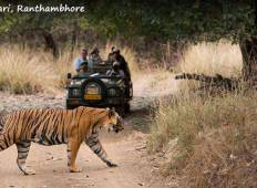 Golden Triangle Tour with Ranthambore Tour