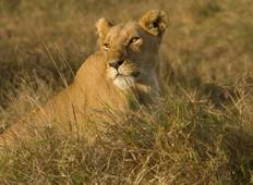 Kenya & Tanzania 4WD Safari Adventure 10D/9N Tour