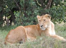 Masai Mara Voluntour 10D/9N Tour