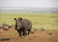 Maasai and Migration (Reverse) Tour