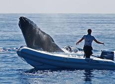 Tonga Whale Encounters Tour