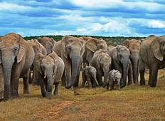 5-Day Group Garden Route & Addo Adventure Tour (one-way) Tour