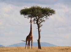 Kenya: A Classic  Safari with Nairobi Tour