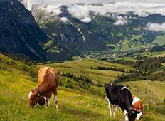 Spectacular Switzerland Tour