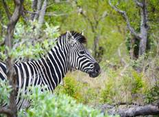 South African Sojourn with Victoria Falls & Botswana Tour