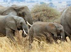 Tanzania Private Safari Tour