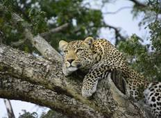 Kenya Safari Experience National Geographic Journeys Tour