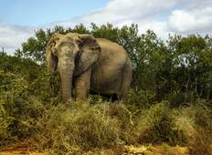 Explore Kruger National Park National Geographic Journeys Tour