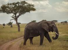 Tanzania Safari Experience National Geographic Journeys Tour