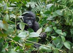 Gorilla and Game Trek - 15 days Tour