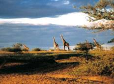 Kenya Wildlife Conservancy By Air Tour