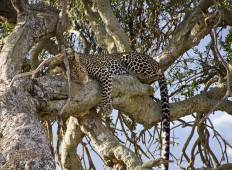 East African Explorer 21 Days Accommodated Tour
