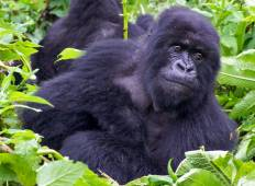 Gorilla Encounter Accommodated Tour