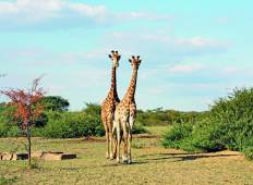 Kruger to Cape Town Tour