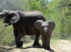 Kruger National Park 3D/2N Tour