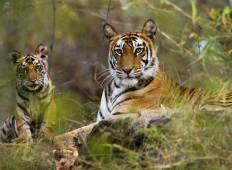 Taj Safaris Wildlife Tour - Ultimate Luxury Tour
