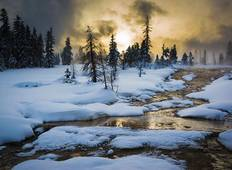 Yellowstone Winter Wildlife In-depth Tour