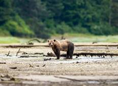 Whales & Bears of British Columbia Tour