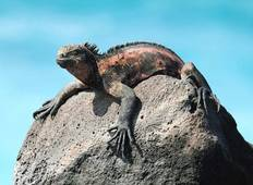 Galapagos Adventure - Nemo II Itinerary A Tour