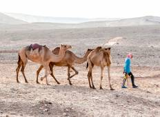 Djibouti Expedition: Footsteps of the Afar Tour