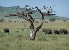 Tanzania The Serengeti & Beyond with Selous Tour