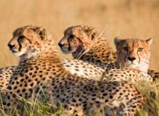 Jewels of Africa with Nairobi Tour