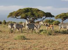 Jewels of Africa with Ol Pejeta Conservancy & Lake Nakuru National Park Area Tour