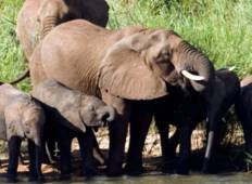 Jewels of Africa with Kruger National Park Area Tour